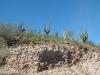 Cactus club Mexico2005