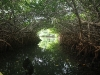 Channel through the mangroves, Bonaire