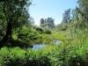 Silverdale Creek Wetlands, July 2016