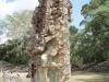 Copan stella 2, Honduras