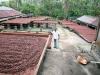Cocoa Beans, Grenada