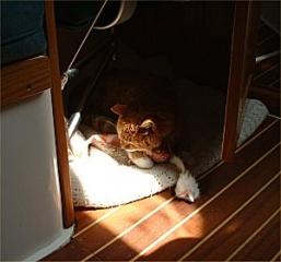 Stubs In The Sun