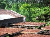 Cocoa drying, grenada