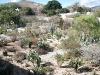 Jardin Etnobotánico, Oaxaca