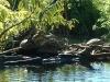 Turtles, Mexico2005