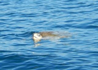 turtle Mexico2015