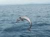 dolphin Mexico2015