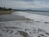 Plovers at Playa Miramar, Jan2016