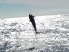 Dolphin 1, Dec2015