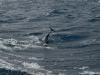 Dolphin 4, Dec2015
