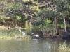 Herons, Nicaragua