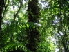 Navira Swamp, Trinidad