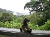 Asa Wright Nature Center, Trinidad
