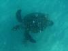 Turtle, US Virgin Idlands